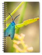 Forester Moth From Bulgaria Spiral Notebook