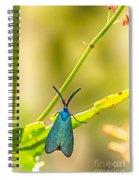 Forester Moth  Spiral Notebook