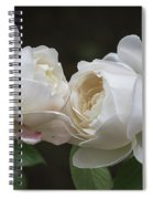 Forever And Always - Desdemona Roses Spiral Notebook