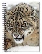 Forever Wild Spiral Notebook