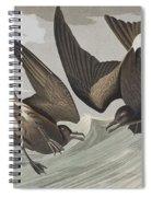 Fork-tail Petrel Spiral Notebook