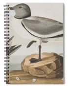 Fork-tailed Gull Spiral Notebook