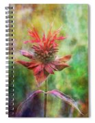 Formal Extravagance 2471 Idp_2 Spiral Notebook