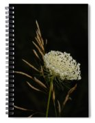 Formal Queen Anne's Lace Study Portrait Spiral Notebook