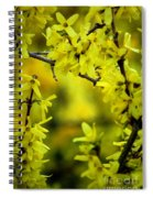 Forsythia At The Hacienda Spiral Notebook