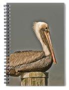 Fort Pierce Pelican Spiral Notebook