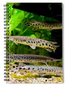 Four Aquarium Fishes In Zoo Spiral Notebook