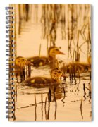 Four Baby Duckies Spiral Notebook