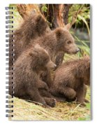 Four Bear Cubs Looking In Same Direction Spiral Notebook