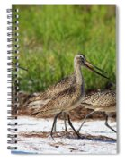 Four Marbled Godwits Spiral Notebook