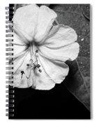Four O'clock - B-n-w Spiral Notebook