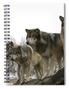 Four Pack Spiral Notebook