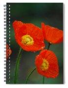 Four Poppies Spiral Notebook