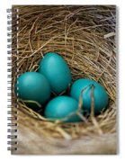 Four Robin Eggs In Nest Spiral Notebook