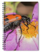Four-spotted Blister Beetle - Mylabris Quadripunctata Spiral Notebook