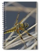 Four Spotted Chaser Spiral Notebook