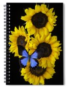 Four Sunflowers And Blue Butterfly Spiral Notebook