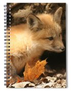Fox Kit At Entrance To Den Spiral Notebook