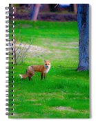 Fox Of Boulder County Spiral Notebook