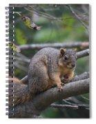 Fox Squirrel On A Branch  Spiral Notebook