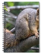 Fox Squirrel On A Branch - Southern Indiana Spiral Notebook
