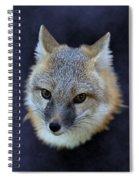 Foxburst Spiral Notebook
