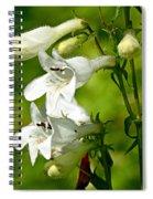 Foxglove Beardtongue - Penstemon Digitalis Spiral Notebook