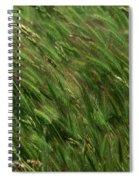 Foxtail Barley - Salisbury Potrero Spiral Notebook