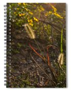 Foxtail Glowing In Sun Spiral Notebook