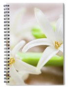 Fragile And Delicate  Spiral Notebook