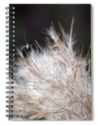 Fragile Seeds Spiral Notebook