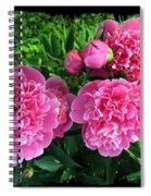 Fragrant Pink Peonies Spiral Notebook