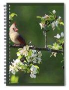 Framed Cardinals In Spring Spiral Notebook
