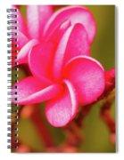 Pink Frangipani Plumeria Flowers Spiral Notebook