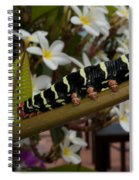 Frangipani Tree And Caterpillar Spiral Notebook