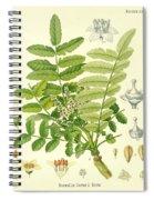 Frankincense Spiral Notebook