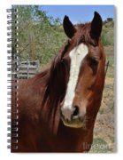 Freedom Horse Spiral Notebook