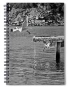 Freedom Is A Seagull Name Black And White Spiral Notebook