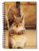 French Fry Eating Squirrel2 Spiral Notebook