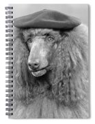 French Poodle Wearing Beret, C.1970s Spiral Notebook