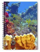 French Reef 1 Spiral Notebook