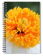 Frenzy Of Stamens Spiral Notebook