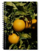 Fresh Oranges Spiral Notebook