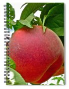 Fresh Peach Spiral Notebook