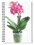 Fresh Pink Orchid In Pot Spiral Notebook