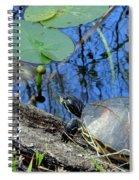 Freshwater Turtle Sunning Spiral Notebook