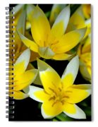 Fried Eggs Spiral Notebook