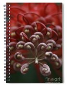 Friendly Foe Spiral Notebook