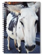 Friendly Route 66 Burro Spiral Notebook