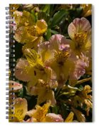 Friendship Yellow Alstroemeira Spiral Notebook